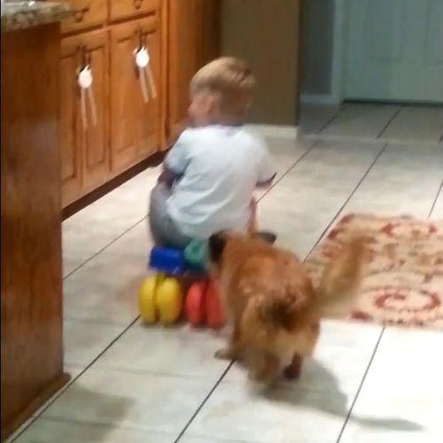 赤ちゃんをフェッチする犬05