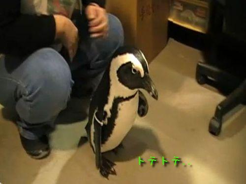 新聞を取ってくるペンギン