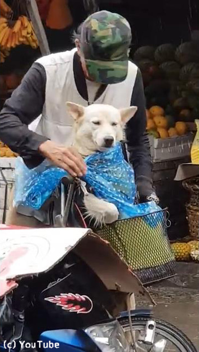 降りだした雨…飼い主さんが愛犬にとった行動に心温まる02