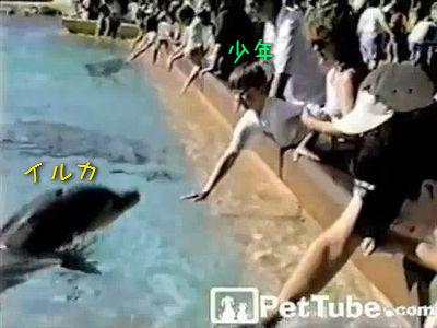 イルカのいたずら