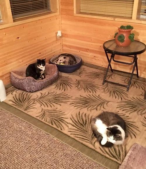 おばあちゃんと3匹の猫01