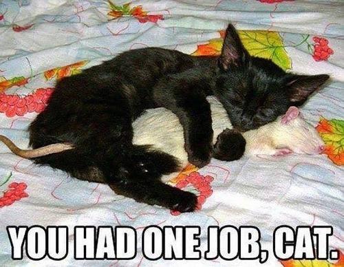 猫の仕事01