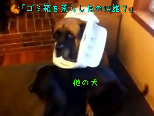 犬に「ゴミ箱を散らかしたのは誰」00