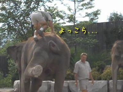 残念なゾウさん登り