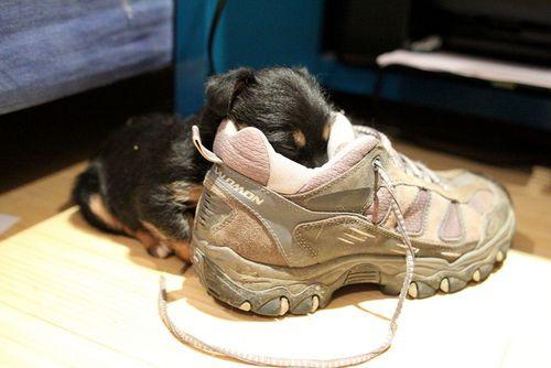 靴の中の犬05