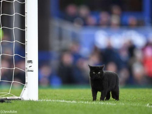 サッカーのピッチに黒猫00