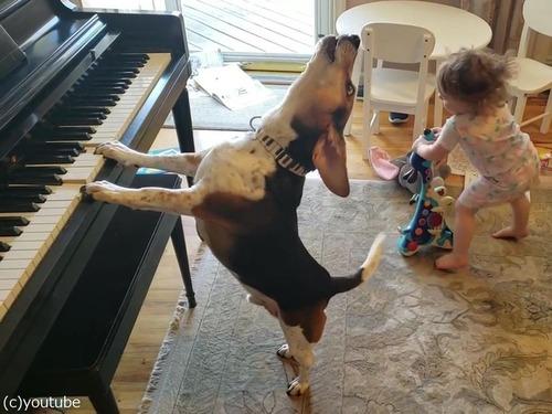 ピアノ弾き語りをする犬と踊る女児00