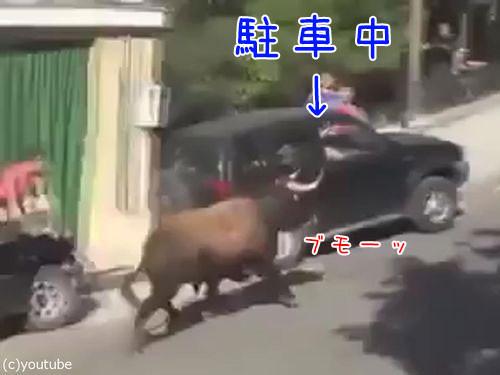 駐車と猛牛00