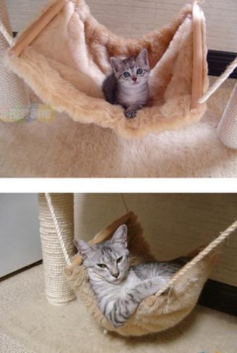 成長した猫02