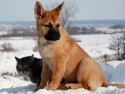 ロシアの犬と猫00
