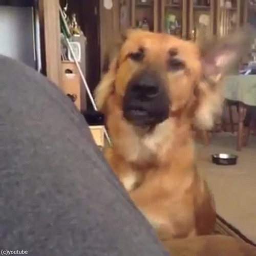 悲しみの表現が豊かな犬01