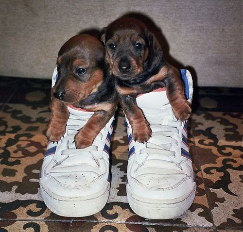 靴の中の犬01