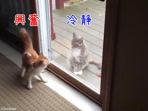 ハイテンションの猫と冷静な猫00