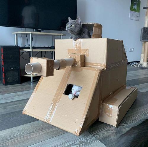ダンボール猫戦車03