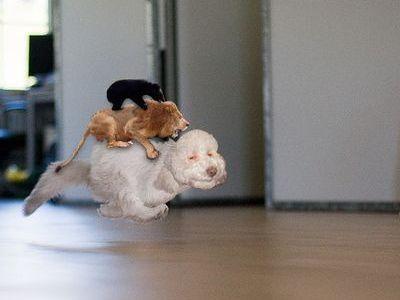 走る猫03