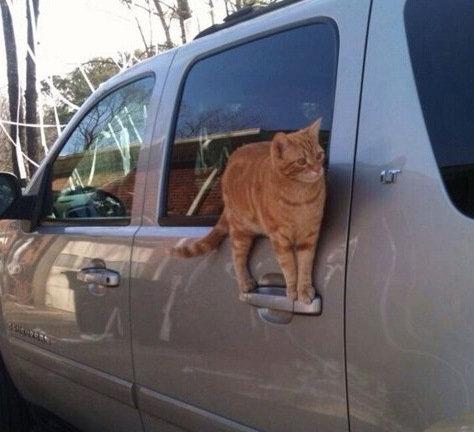 バランス猫13