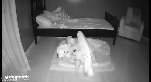 ベッドから降りて犬の隣で寝る赤ちゃん03