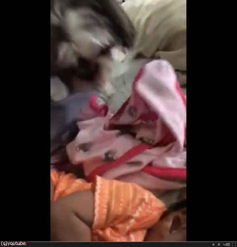 赤ちゃんにブランケットを掛けてあげる犬01