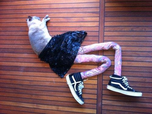 足の長い猫グッチ01