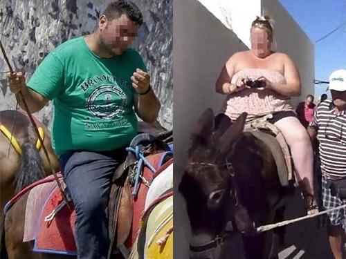 ギリシャが肥満の観光客をロバに乗せるのを禁止00