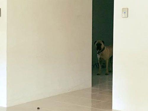 遠くからこっそり見る犬01