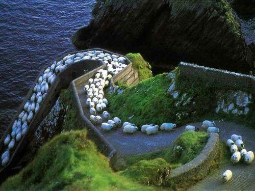 アイルランド「ディングル」10