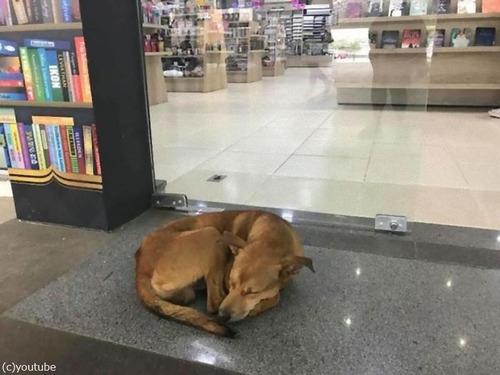 本を盗んだ野良犬00