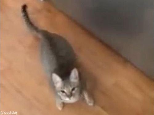「うちの猫は…私が歌うと飛びついてくる」01