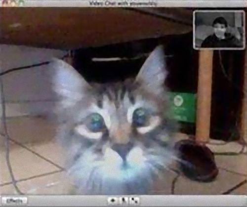 ビデオチャットで猫が自分を認識してくれた03