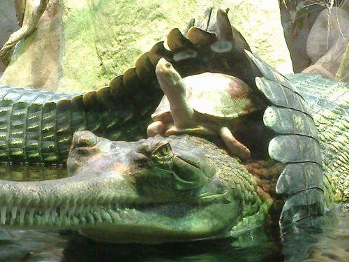 動物園で幸運な写真が撮れた02
