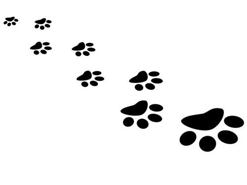 猫9匹を含む17匹のペットを座らせて記念撮影に成功した飼い主00