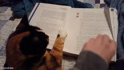 本のページをめくらせない猫04
