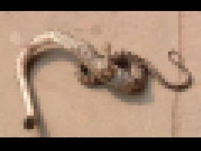 脚の生えたヘビ00
