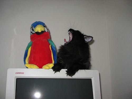 インコと猫11