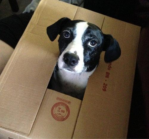 箱好きの犬11