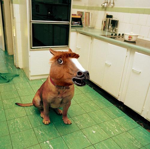 犬に猫マスク08