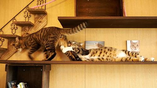 演技力の高い猫たち01