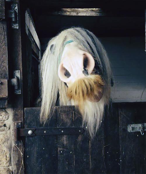 立派な口ヒゲのある馬10
