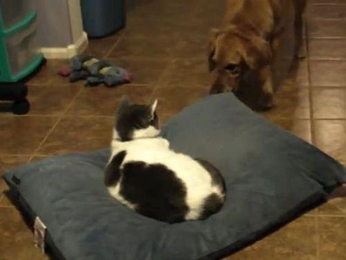 犬と猫のクッション争い01