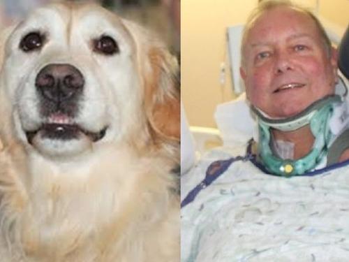 愛犬が首を骨折した飼い主を救出00