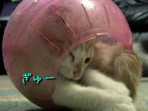 ハムスター・ボール猫