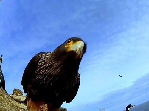 卵カメラと鳥 04