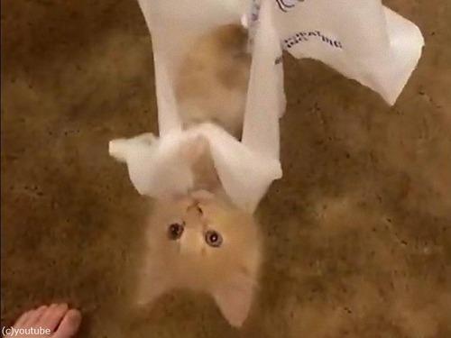 レジ袋が好きな子猫01