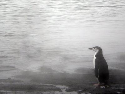 ペンギンガール03