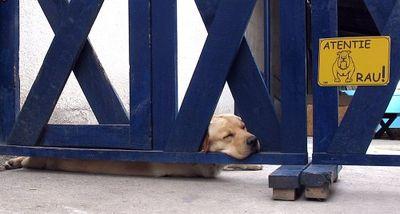 寝てる犬13