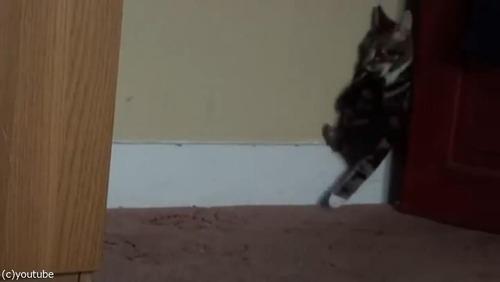 ママ猫が、迷子の子猫を連れ帰るとき05