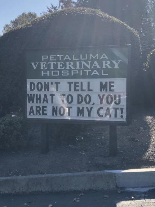 獣医が挙げたおもしろサイン05