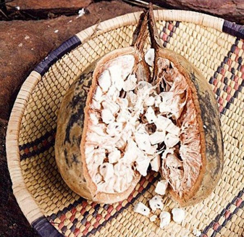 バオバブの木12