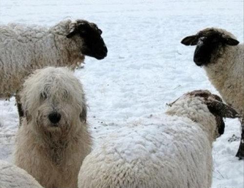羊飼いの楽しみ02