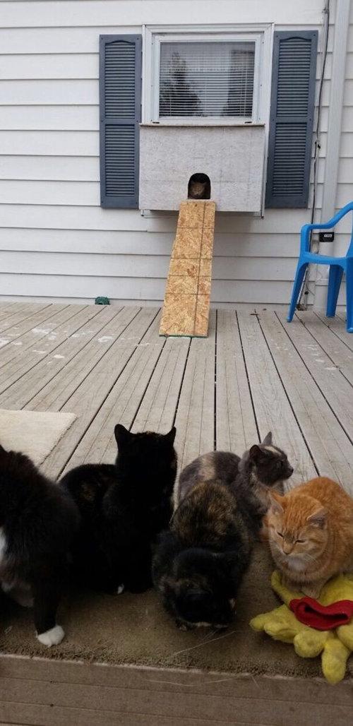 猫水槽03